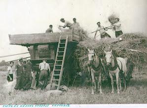 Photo: Kézi erővel kaszált gabona cséplése