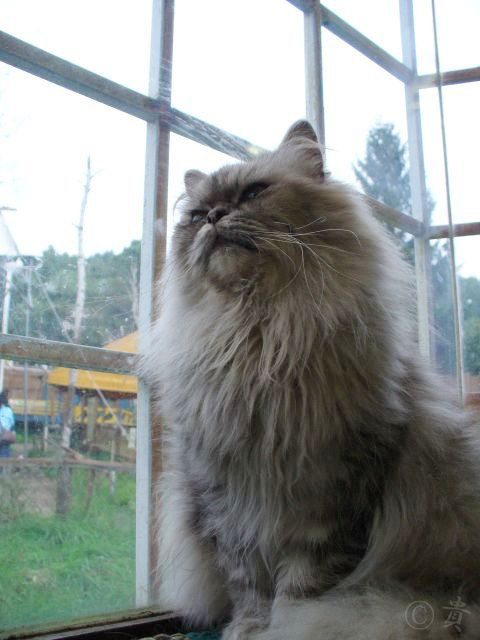 Photo: 動物-animal-