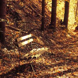 Morning Gold V. by Zsolt Zsigmond - City,  Street & Park  City Parks ( forest, sunrise, golden light, bench, woods, trees, morning, foliage, sunlight, fall, leaves, light, autumn, park )