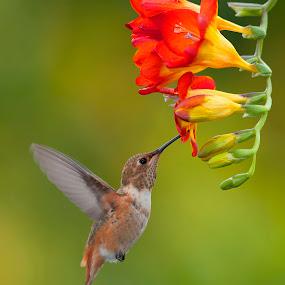 Hang in the air by Dan Pham - Animals Birds