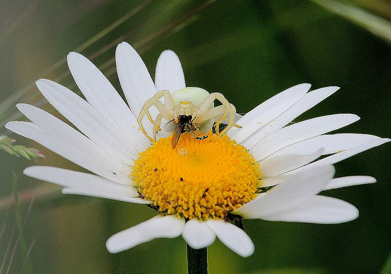 Il ragno e la mosca di Naldina Fornasari