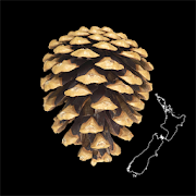 App Icon for NZ Wilding Conifers App in Czech Republic Google Play Store