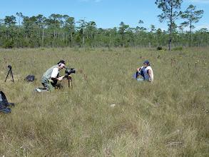 Photo: Interview at the famous Sarracenia flava ssp. rubricorpora site near Sumatra (Florida Panhandle).