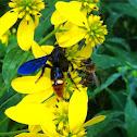 Dirt dobber? and honey bee
