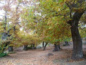 Photo: las hojas tapizan el suelo