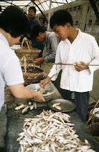 Photo: 11100 鎮江/自由市場/魚