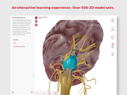 Anatomy Physiology Apk Download Apkpure