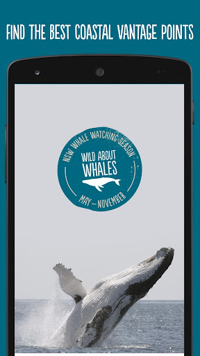 Wild About Whales