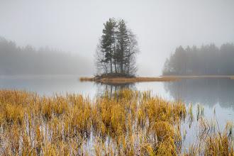 Photo: Foggy november day by the lake Skapertjern, Lier, Norway