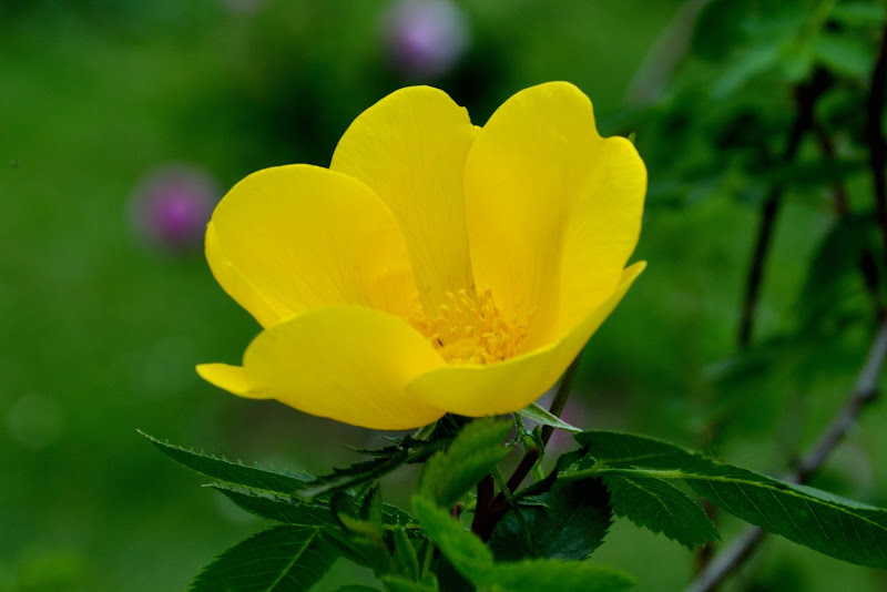 Yellow & Green di Valentina Soccorso
