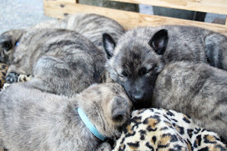 Photo: met zijn allen slapen op het kussen
