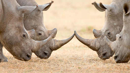 A handful of surveillance cameras may not seem very sophisticated for a sanctuary which is also home to the largest population of critically endangered black rhinos anywhere in East Africa.