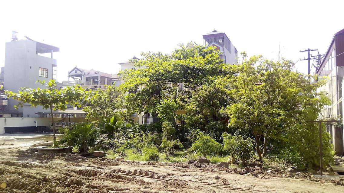 cây tại sân trường