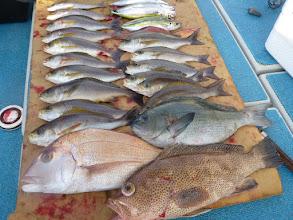 """Photo: """"戸田さん""""の釣果です! 真鯛、クロ、ハタ、イサキ・・・ 日中、もう少し潮が動いていたら 更に食っていたでしょうね。"""