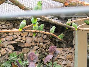 Photo: Parakeets