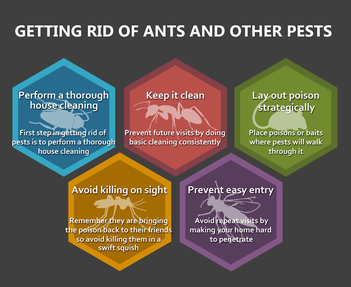 Getting Rids of Ants and Other pests