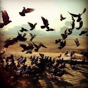 Early birds by Tyrone de Asis - Instagram & Mobile iPhone