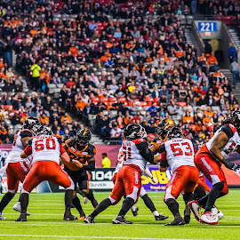 Protecting The QB by Garry Dosa - Sports & Fitness American and Canadian football ( sports, teams, players, cfl, black, football, quarterback, people, orange, red, qb, white, indoors, stadium, colours )