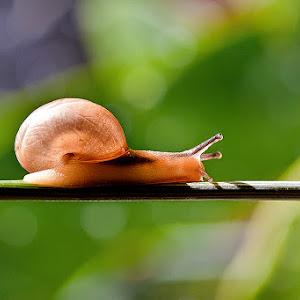 gold snail.jpg