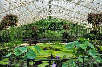 Photo: Waterlily House - Kew - Royal Botanical Gardens