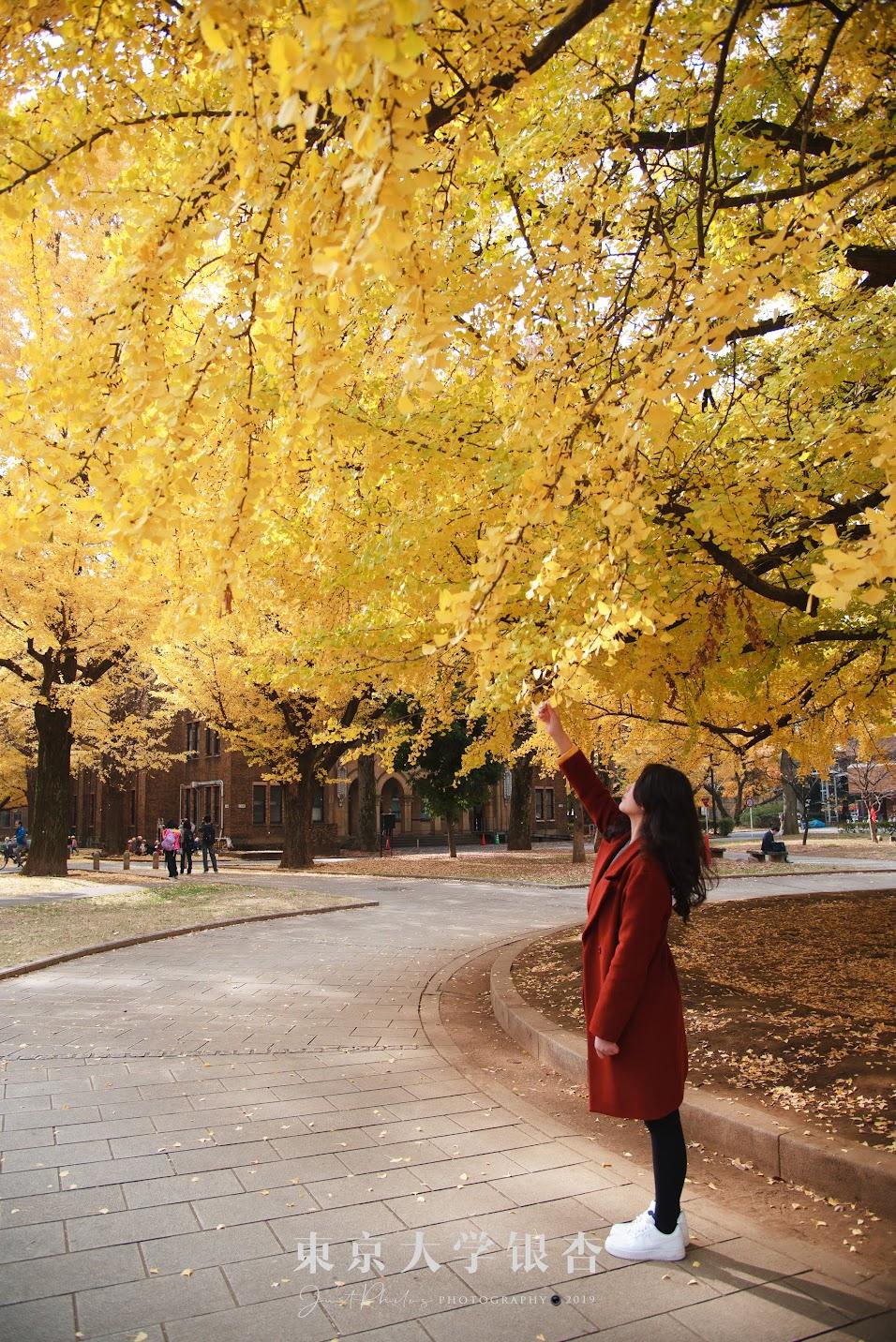 本鄉校區的大銀杏樹下也非常適合拍攝人像,前來的朋友千萬不要錯過。