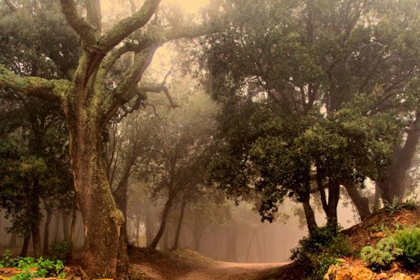 Nebbia mattutina di fabio1962