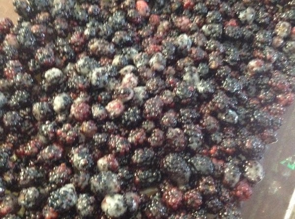 Place the black berries in a mixing bowl and pour 1/4 c melted butter...