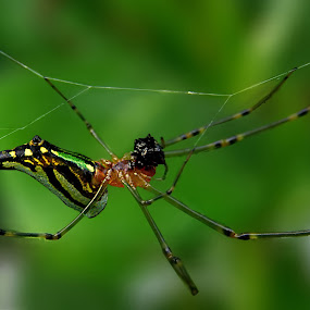 Lunch time by Victor Mukherjee - Animals Insects & Spiders