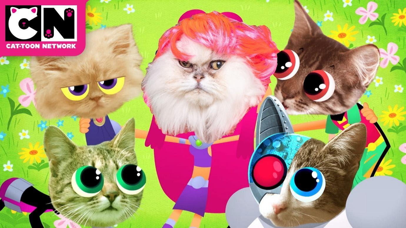 A group of kittensDescription automatically generated with low confidence