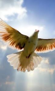 flying birds live wallpaper screenshot 0