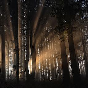 Paprsky v lese by Jana Černošková - Landscapes Forests ( forest,  )