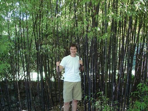 bamboo1