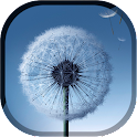 Magic Neo Wave : Dandelion LWP icon
