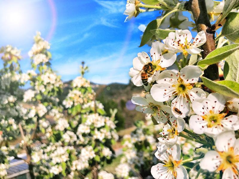 Di Fiore in Fiore di Francesca Maifredi ©