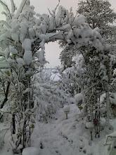 """Photo: In de tuin """"sneeuwboog"""""""