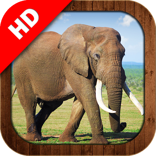 Animals Learning 教育 App LOGO-硬是要APP