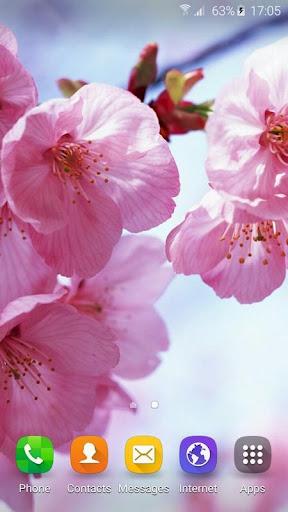壁纸 樱花