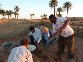 Photo: Making sure the Groasis waterboxx is secured tightly in the ground.