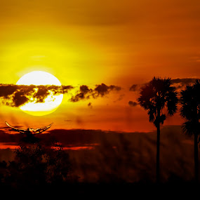 Bird Under sun  by Rechard Sniper - Landscapes Sunsets & Sunrises