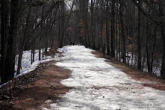 Photo: Bay Path trail