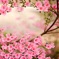 Spring Flowers Live Wallpaper APK
