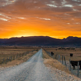 Long Road to Sunrise by Chad Roberts - Landscapes Sunsets & Sunrises ( orange, sunrise, grand tetons, road, cows, sunset, rural,  )