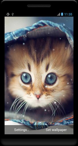 かわいい赤ちゃん動物の壁紙