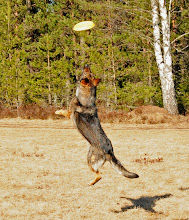 Photo: Ayla leker med frisbee