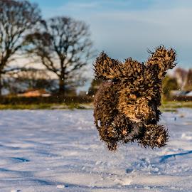 Action Dog by Nigel Bishton - Animals - Dogs Running