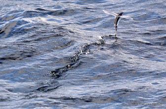 Photo: Flying Fish Photo by S. Webb