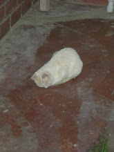 Photo: Our cat, Jashi, sleeping with her head into the ground.