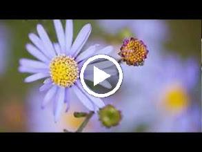 Video: Antonio Vivaldi  Jubilate, o amoeni chori [Introduction] in D major (RV 639) -
