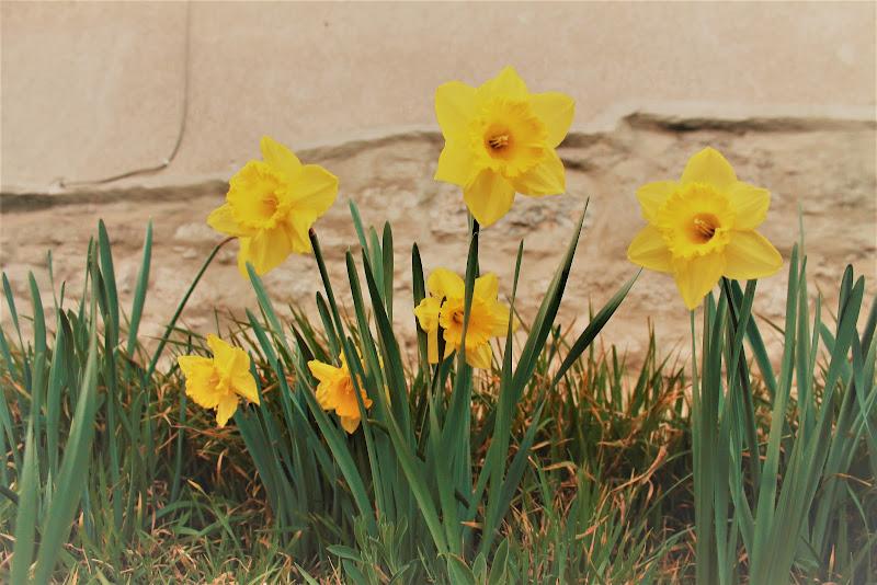 FLOWER di Danii.