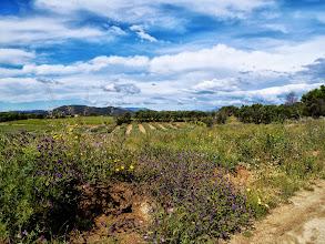 Photo: Le beau temps enfin retrouvé favorise l'explosion de la végétation et des fleurs multicolores